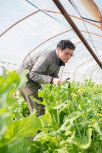 白菜を収穫する並木さん