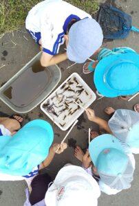 田んぼの学校でザリガニ釣り
